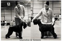 querubin-sixteen1